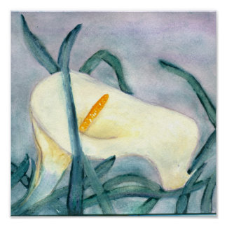 Watercolor Calla Lilly Posters