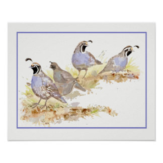Watercolor Covey of California Quail Birds Poster