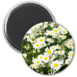 Watercolor Daisies Refrigerator Magnets