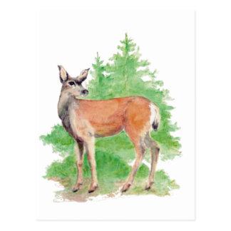 Watercolor Deer, Animal Nature Wildlife Postcard