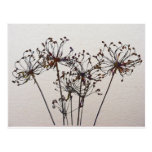 Watercolor Dried Flowers Post Cards