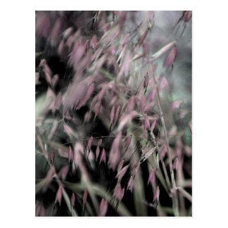 Watercolor Grasses in Pink Postcard