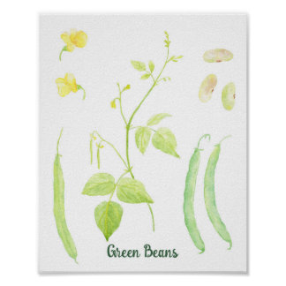 Watercolor Green Beans Poster French Beans