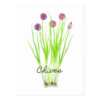 Watercolor herb chives illustration postcard