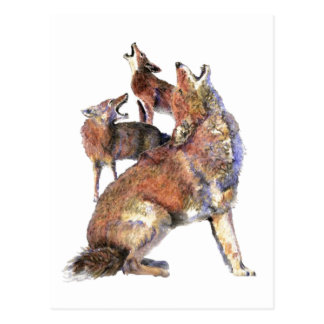 Watercolor Howling Coyotes Animal Nature Art Postcard
