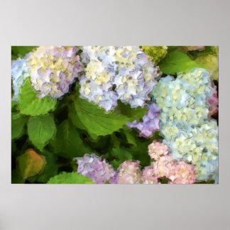 Watercolor Hydrangeas Flowers Poster
