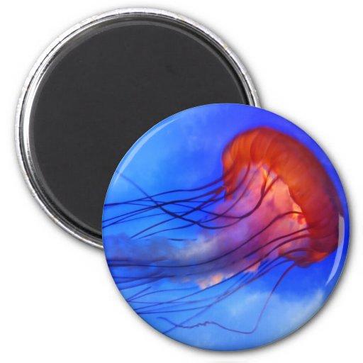 Watercolor Jellyfish Fridge Magnets