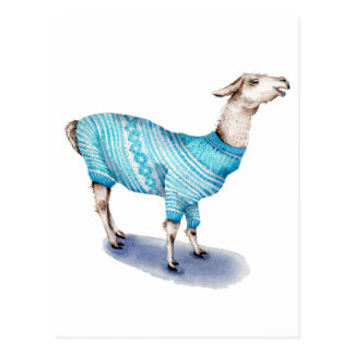 Watercolor Llama in Blue Sweater Postcard