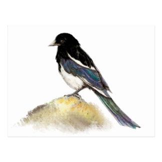 Watercolor Magpie Garden Bird Nature Postcard