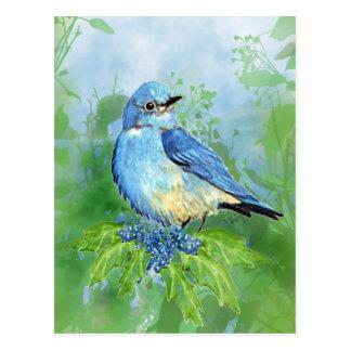 Watercolor Mountain Bluebird Blue Bird Art for the Postcard