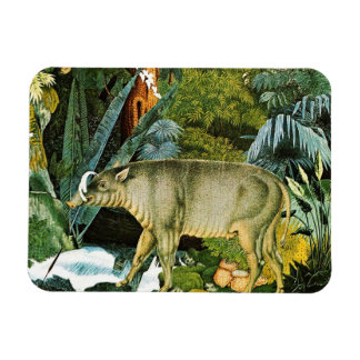 Watercolor of a Babirusa Wild Pig Rectangle Magnets