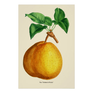 "Watercolor of Pear ""Duchesse de Mouchy"" Poster"
