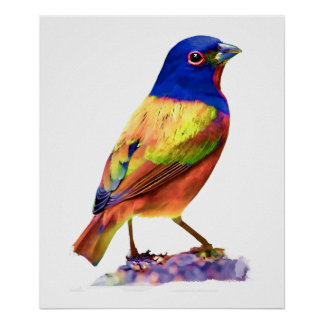 Watercolor Painted Bunting Song Bird Posters