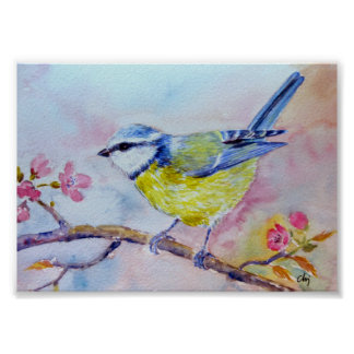 Watercolor Painting Bluetit Blue bird Poster