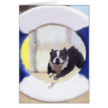 Watercolor painting of a Boston Terrier jumping Card
