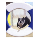 Watercolor painting of a Boston Terrier jumping Postcard