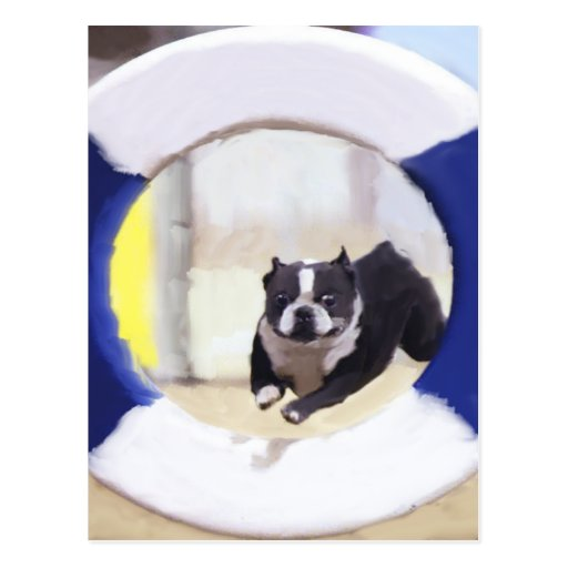 Watercolor painting of a Boston Terrier jumping Postcards