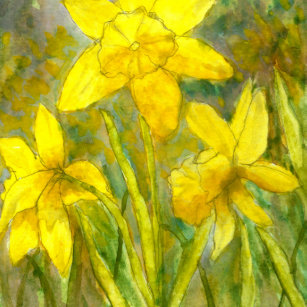 Yellow daffodil stickers zazzle watercolor painting yellow flowers art daffodils classic round sticker mightylinksfo
