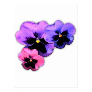 Watercolor Pansies Postcard