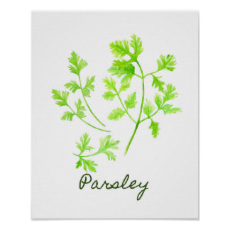 Watercolor Parsley Illustration Poster