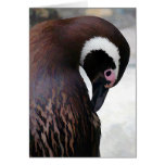 WaterColor Penguin Cards
