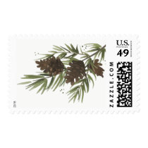Watercolor Pine Sprigs, Christmas Stamp