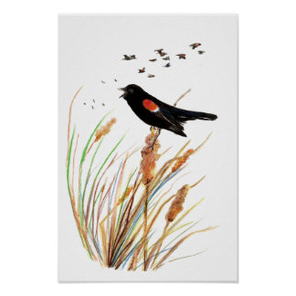 Watercolor Red-Winged Blackbird - Bird Collection Poster