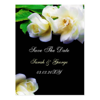 watercolor romantic white rose save the date post card