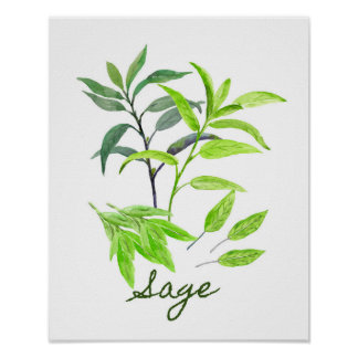 Watercolor Sage Illustration Poster