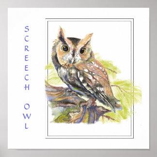 Watercolor, Screech Owl, Bird Print