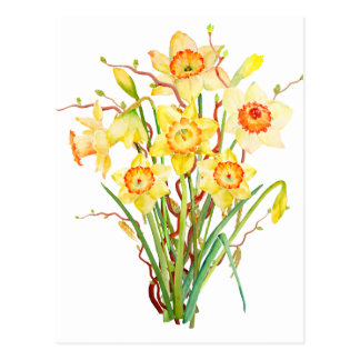 Watercolor Spring flower daffodils Postcard