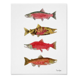 Watercolor Studies of Salmon Poster