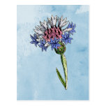 Watercolor Thistle Post Card