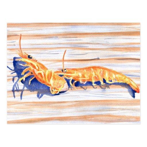 Watercolour del camarón en un muelle, cebo de tarjeta postal