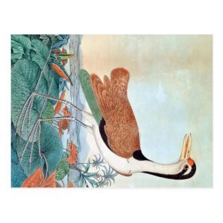 Watercolour del pájaro de Jacana (Aloys Zotl) Tarjetas Postales