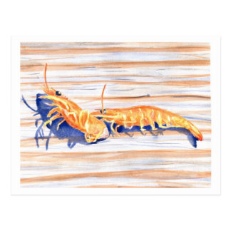 Watercolour of Shrimp on a dock, fishing bait Postcard