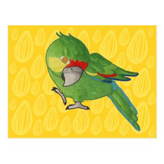 Watercolour parrot postcard