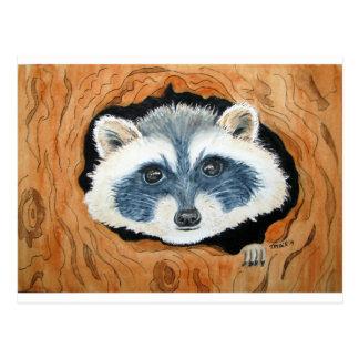 Watercoor by T Ryder, Raccoon Hideaway.JPG Postcard