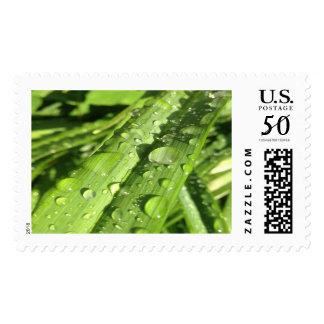 Waterdroplets on a Leaf- Postage Stamp