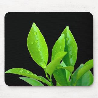 Waterdrops en las hojas del verde - Mousepad