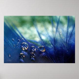 Waterdrops en pluma póster