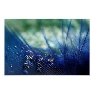 Waterdrops on Feather Poster