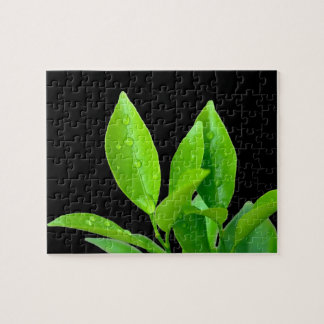 Waterdrops on Fresh Green Leaves - Puzzle