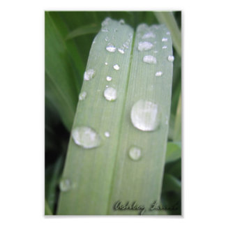 Waterdrops Photo Print