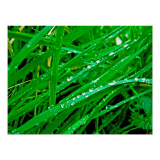 Waterdrops Póster