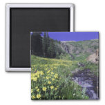 Waterfall and wildflowers in alpine meadow, 2 2 inch square magnet