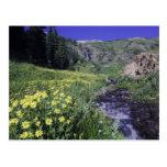 Waterfall and wildflowers in alpine meadow, 2 postcard