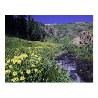 Waterfall and wildflowers in alpine meadow, 2 postcard