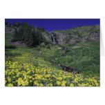 Waterfall and wildflowers in alpine meadow, 3 card