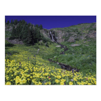 Waterfall and wildflowers in alpine meadow, 3 postcard